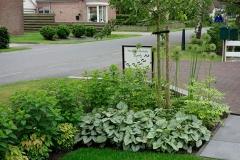 voortuin-groen-blad