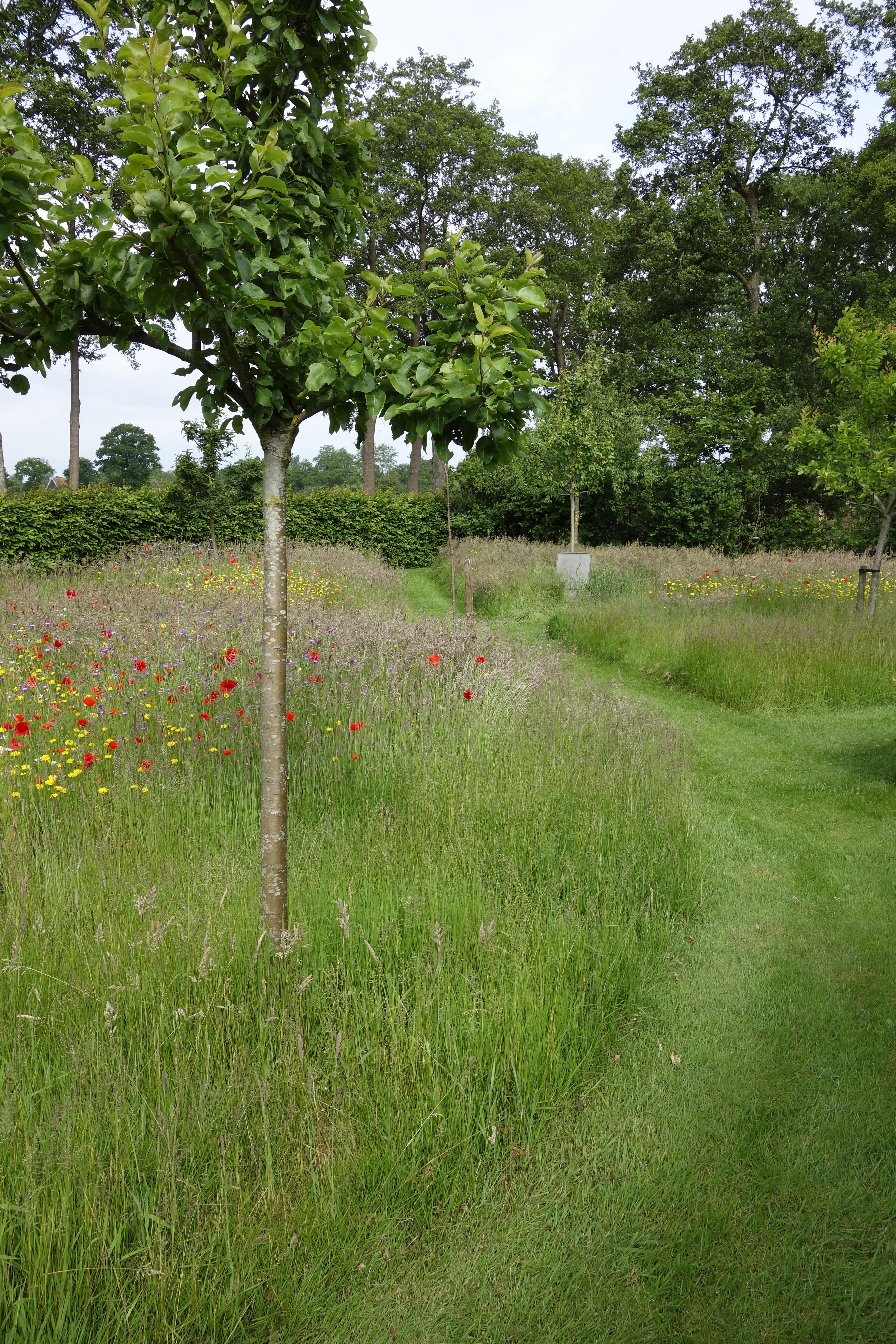 Boomgaard Wilde bloemenweide