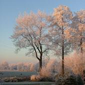 wintertuin_bomen_hoogenboom