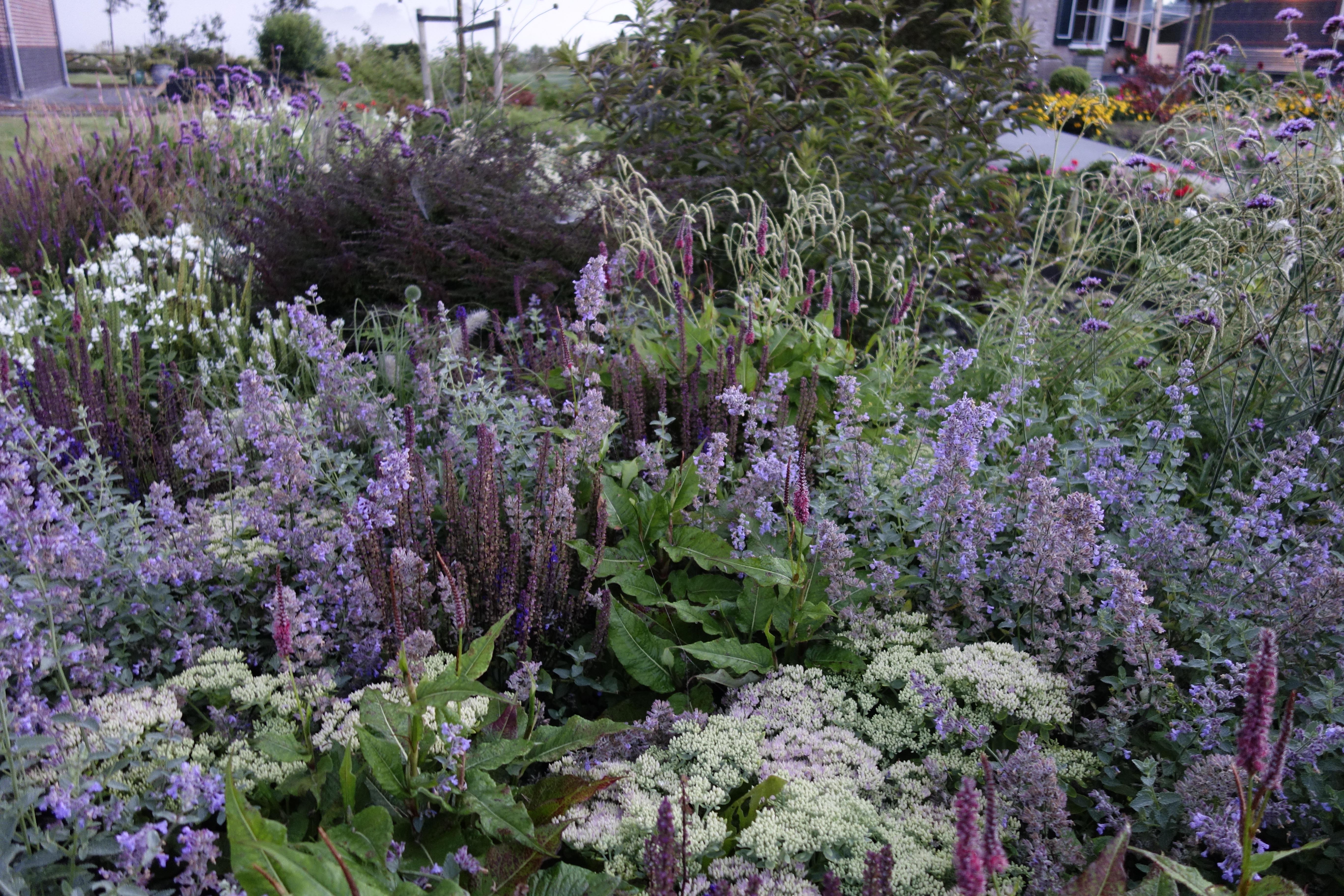 border paars roze lila wit vlinders bijen