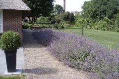 landelijke tuin met nepeta en gazon