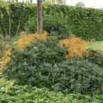 onderhoudsvriendelijke border met rhododendron en esdoorn