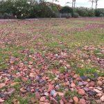 grond bezaaid met gras onkruid