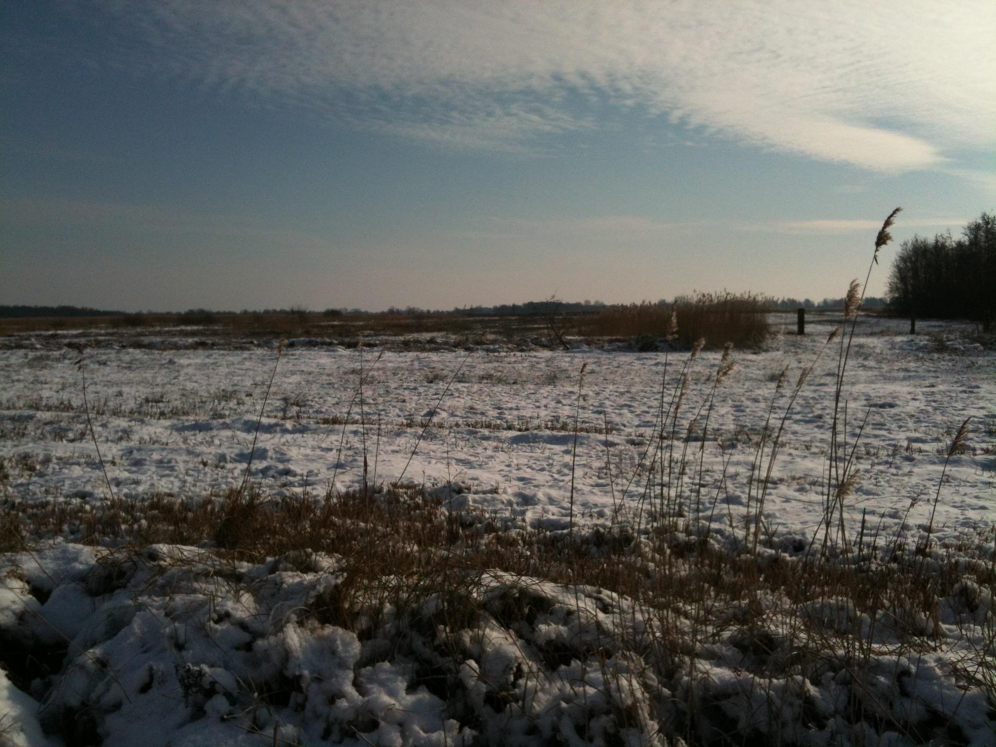 Winter vijver plas vorst sneeuw