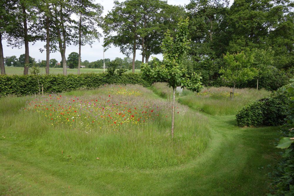 Boomgaard Wilde bloemenweide bloemrijk grasland ©Groenerwaard