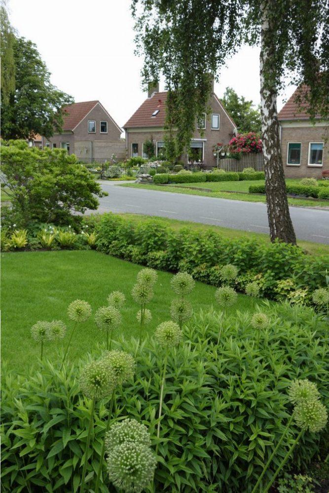voortuin groen allium weelderig drenthe ©Groenerwaard