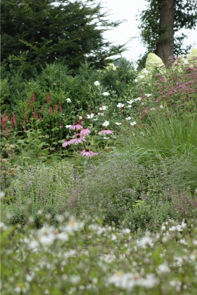 border vaste planten landelijk herfst ©Groenerwaard