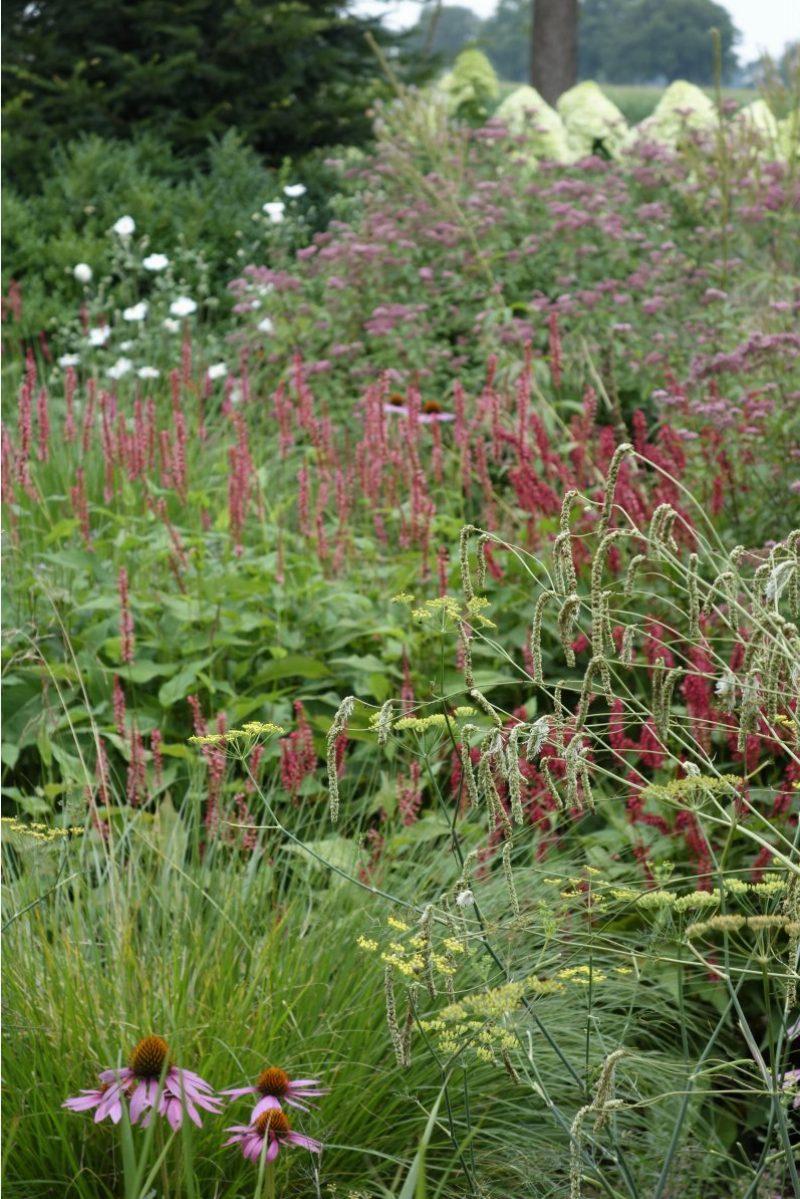 border vaste planten echinacea persicaria eupatorium ©Groenerwaard