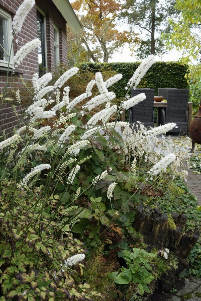 herfst tuin schaduw ©Groenerwaard
