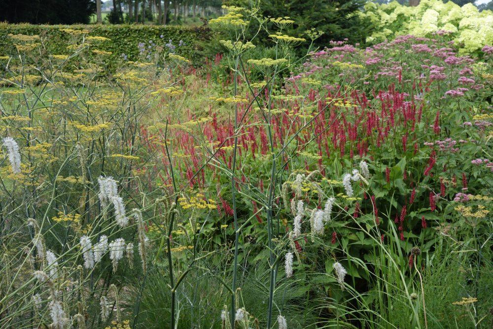 prairieplanten border herfst eupatorium persicaria foeniculum sanguisorba ©Groenerwaard