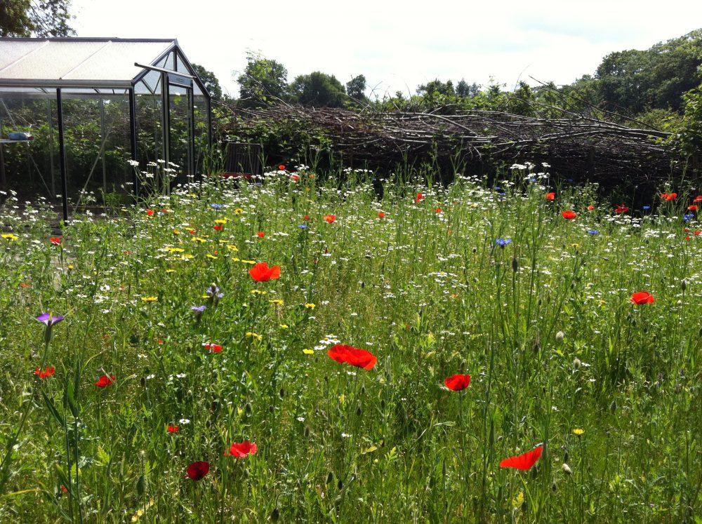 bloemenweide takkenril kas natuurlijk ecologisch ©Groenerwaard