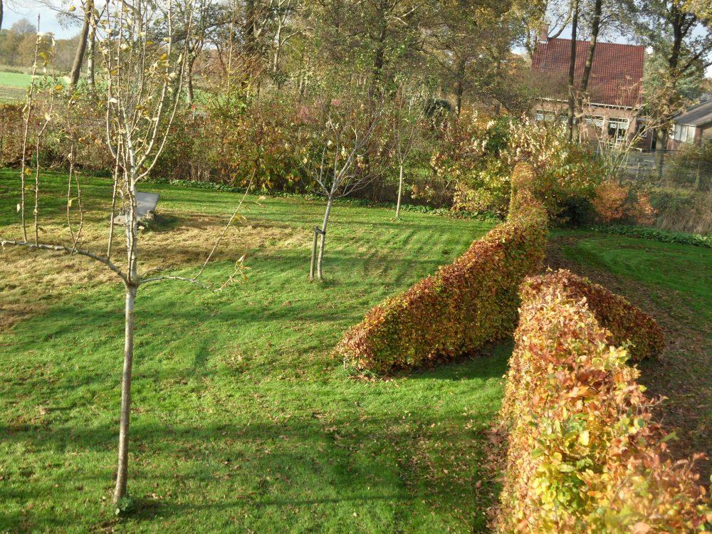 haag haagbeuk beuk boomgaard natuurlijk rond ©Groenerwaard