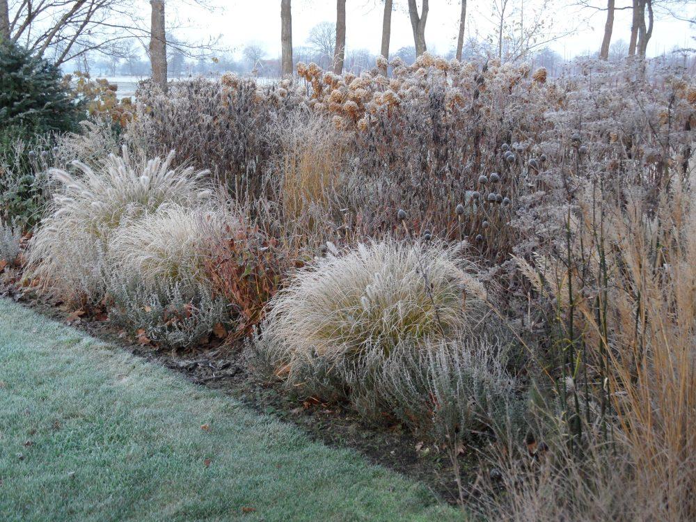 winter siergrassen rijp sneeuw tuinontwerper tuincoach ©Groenerwaard