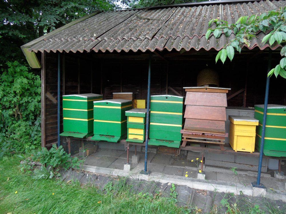 bijen zijn noodzakelijk voor onze toekomst tuin landschap ©Groenerwaard