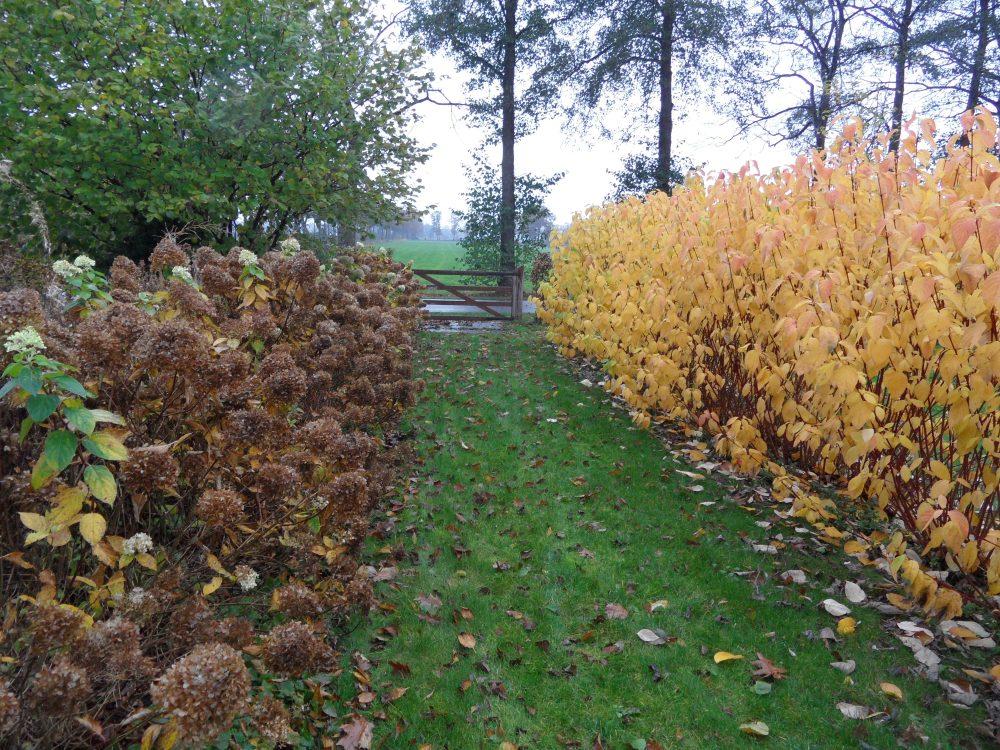 entree oprit laan herfstkleur geel ©Groenerwaard