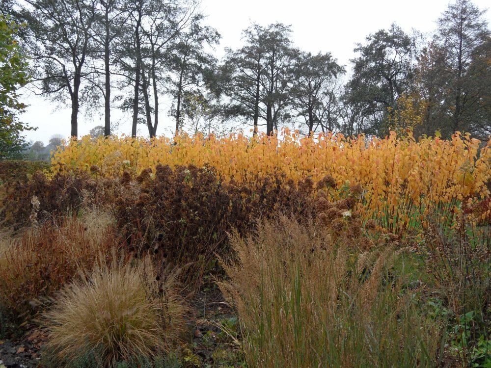 herfstkleur herfstborder siergrassen herfst tuin ©Groenerwaard