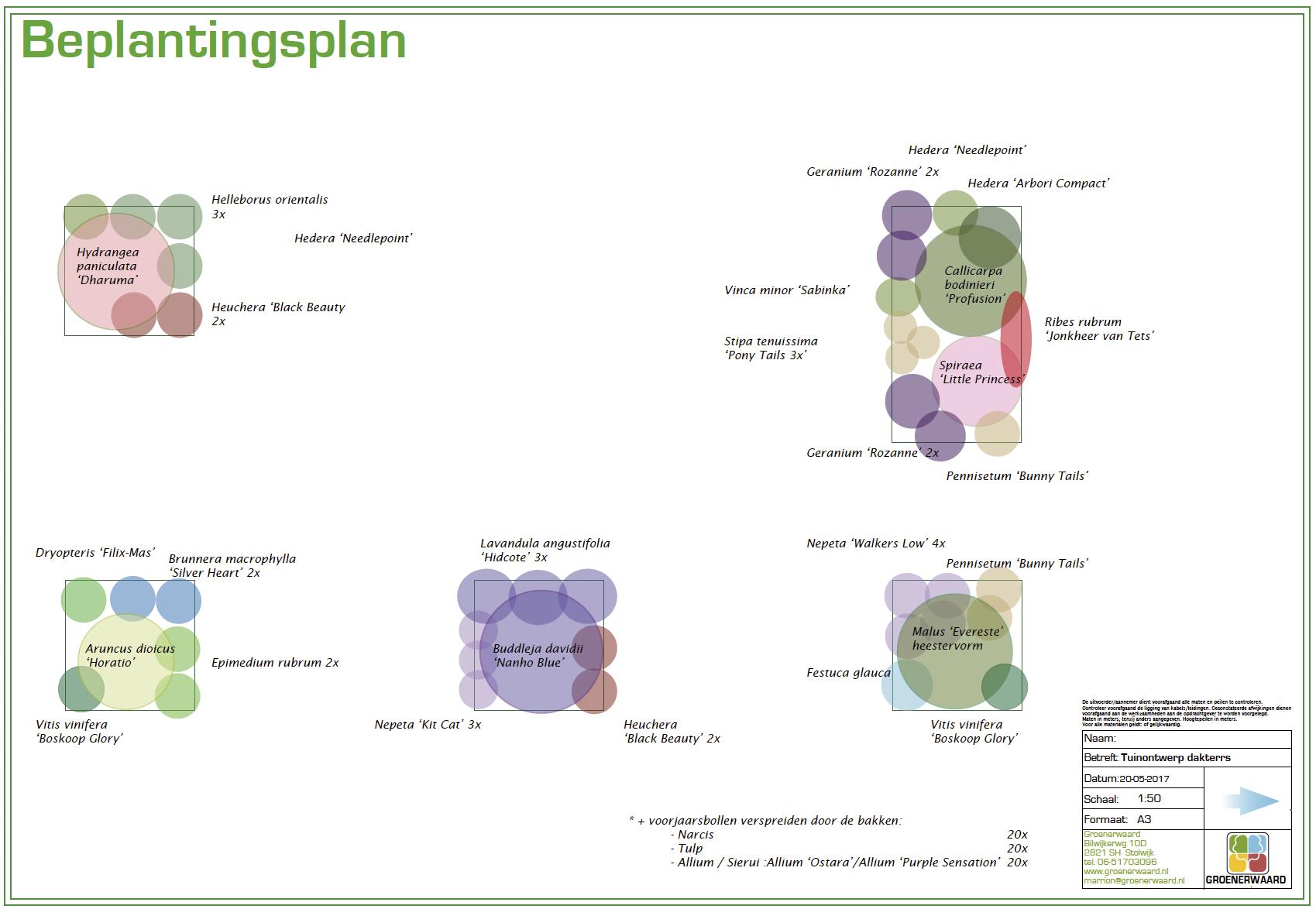 beplantingsplan dakterras daktuin bloembak ©Groenerwaard