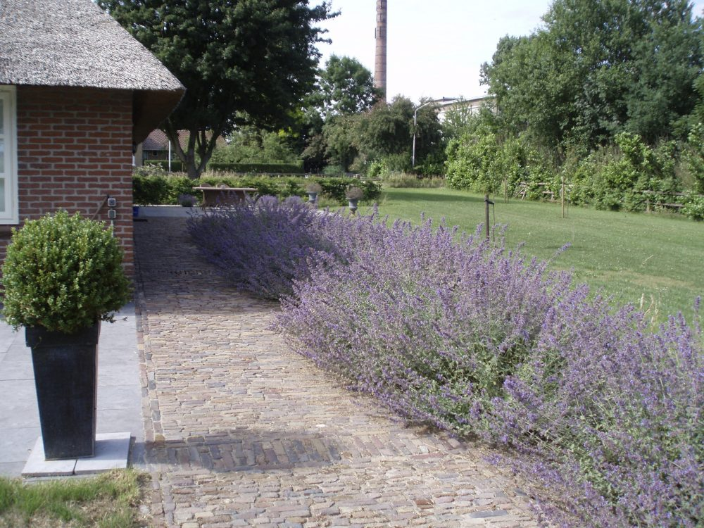 erf boerderij tuin ontwerp drenthe terras mediterraan leilinde ©Groenerwaard