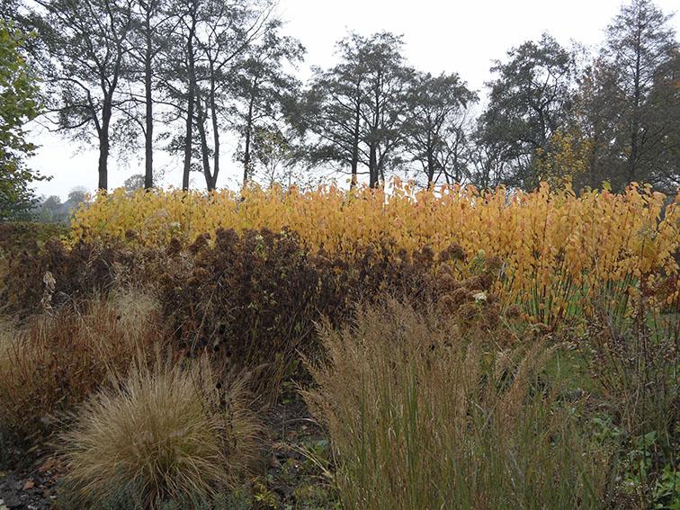 herfstborder_siergras_cornus_geel ©Groenerwaard