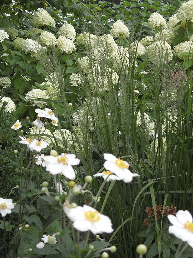 herfstborder_wit_anemoon_hortensia limelight calamagrostis_tuinontwerp ©Groenerwaard