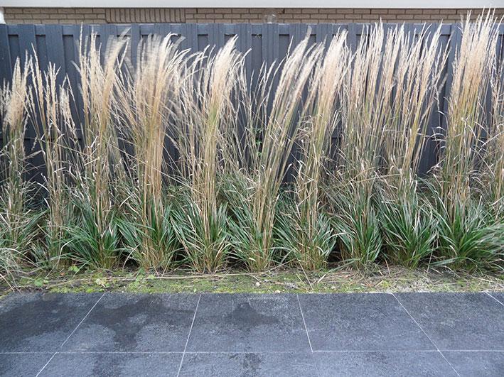 modern-siergras-antraciet tuin tuinontwerp ©Groenerwaard