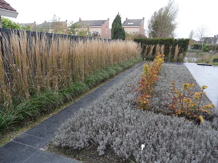 moderne-tuin-siergras-lavendel ©Groenerwaard