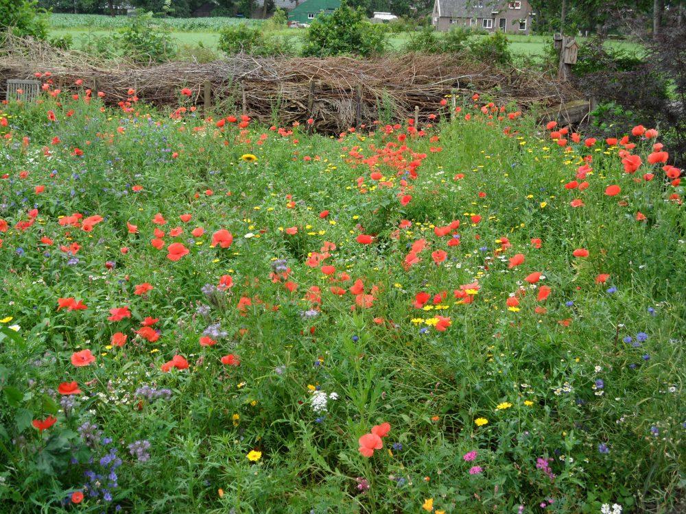 takkenril klaprozen tuinontwerp bijen insecten ecologisch ©Groenerwaard