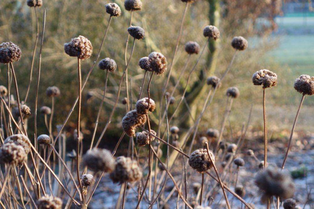winter structuur tuin ©Groenerwaard