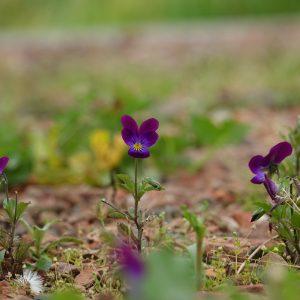 Onkruid in grind oprit tuin