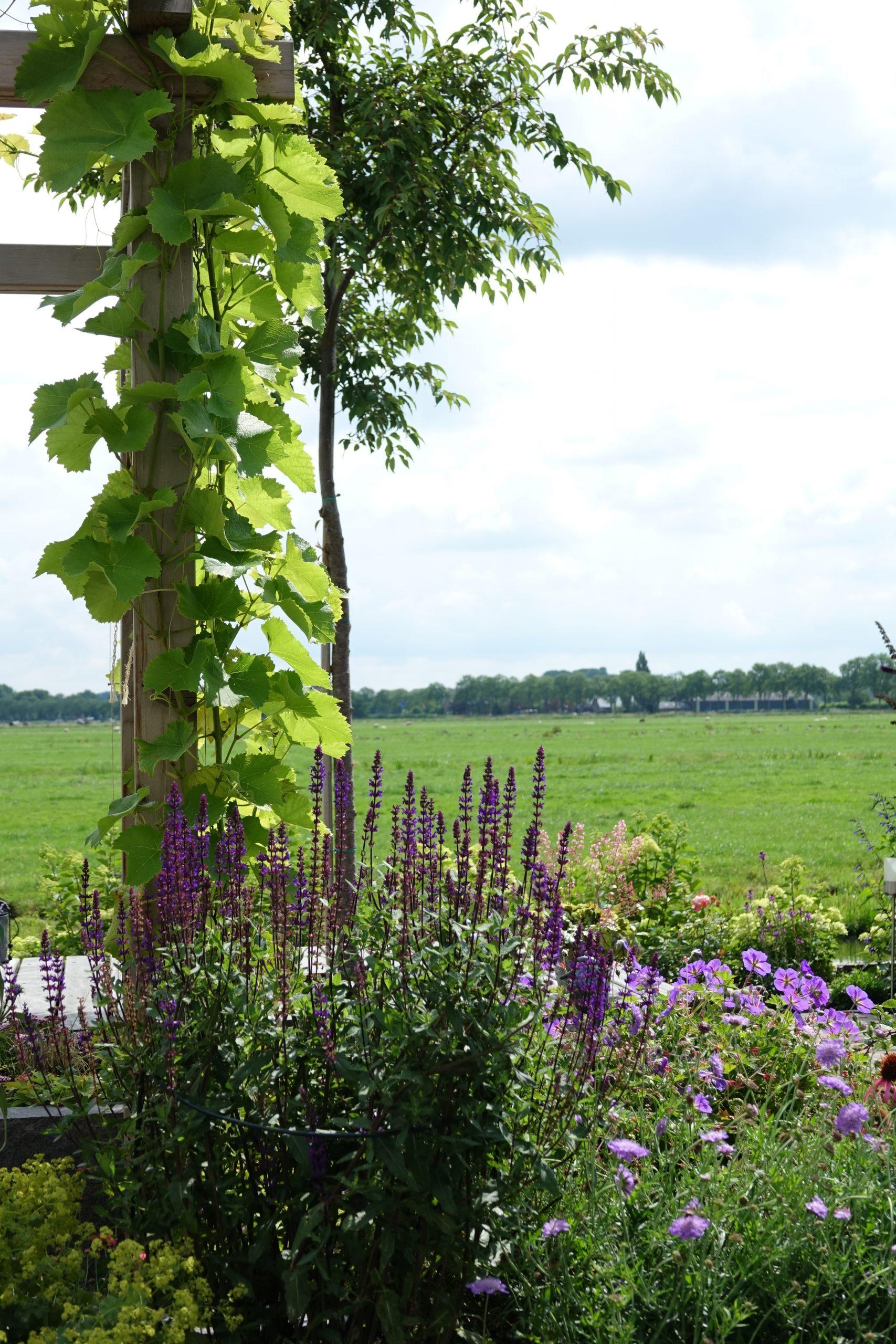 Heerlijke tuin met tuinhuisje en pergola met uitzicht in de polder van Bergambacht ©Groenerwaard