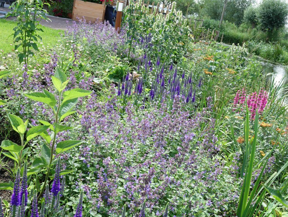 beplantingsplan border, bloei insecten plantplan ©Groenerwaard