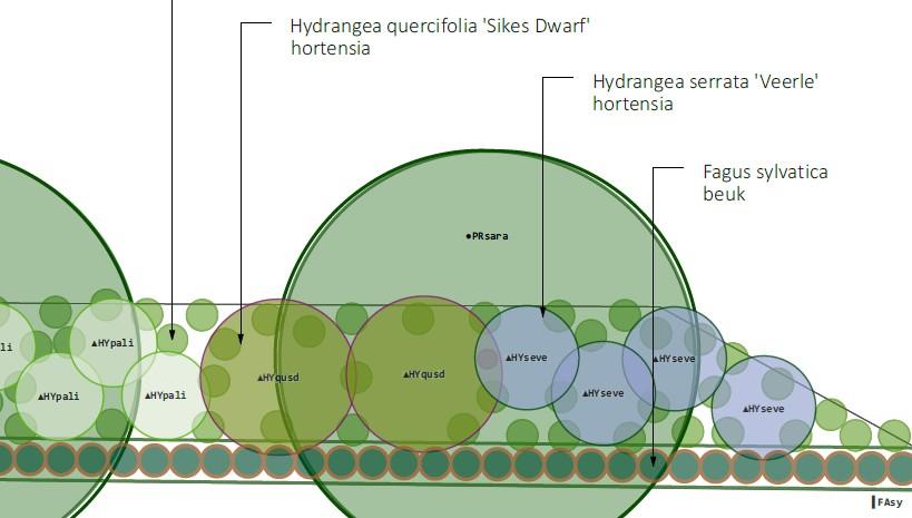 Beplantingsplan Plantplan Border Tuin ©Groenerwaard
