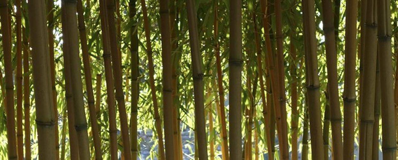 header-2019-bamboe-1240x300.jpg