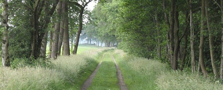 pad door boslandschap